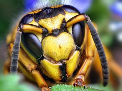 ハチ駆除はこちら