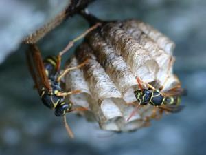 ハチ駆除 高知